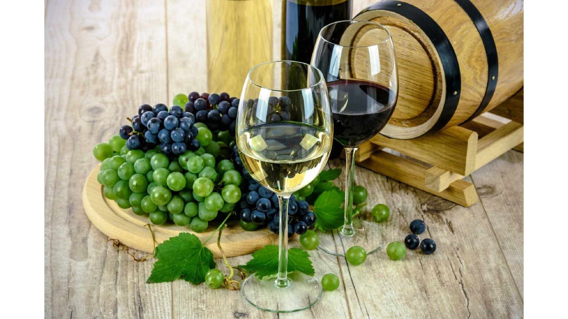 Wines and Grappas of Trentino